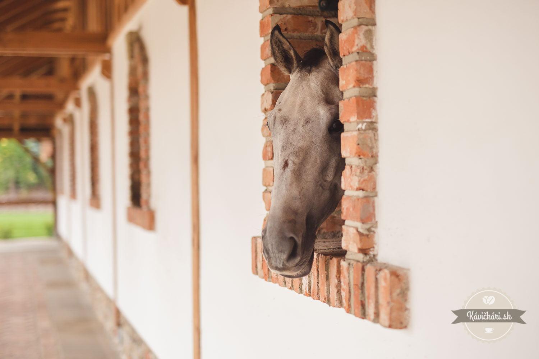 Kôň v Zwicker restaurant Prešov