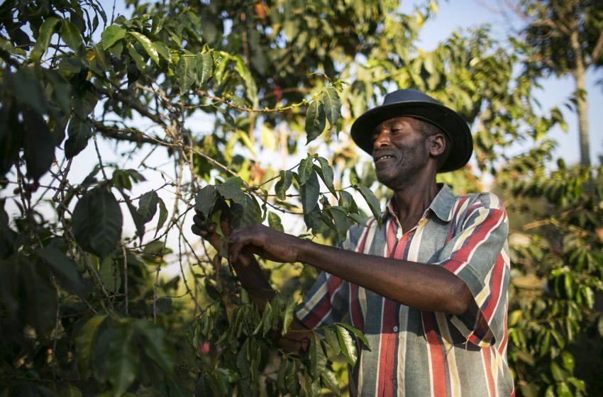 Káva z Rwandy: Aký je jej príbeh