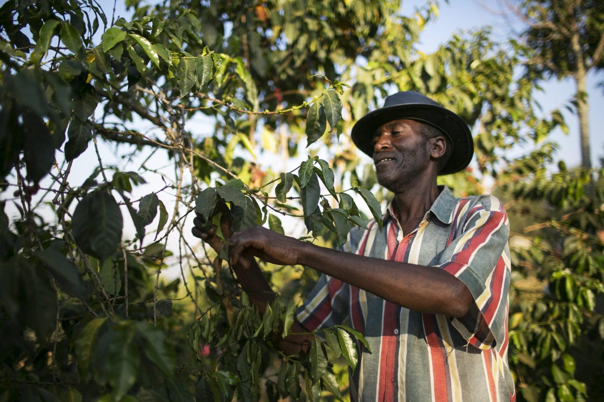 Na plantáži v Rwande